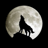 Benign_Wolf33